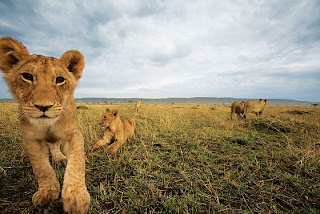 New York Magazine Kenya