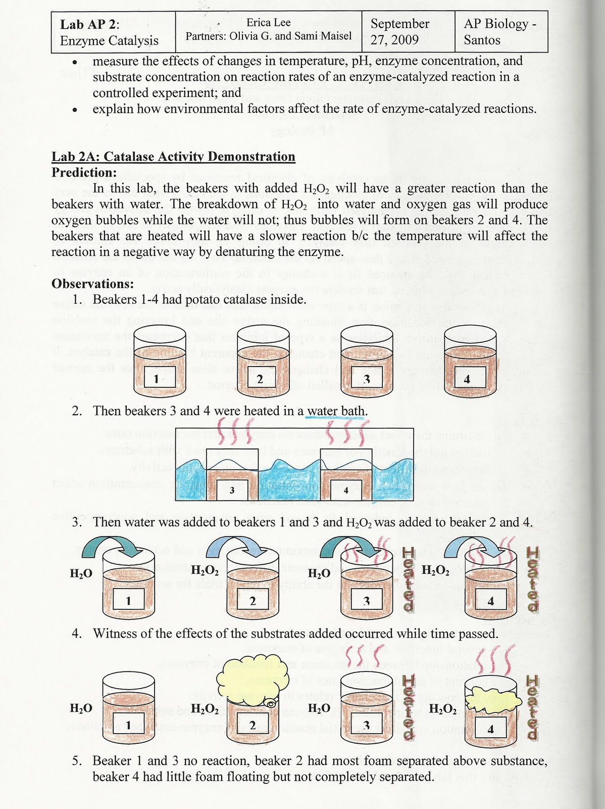enzyme formal lab Biology 171l – general biology lab i lab 6: enzyme kinetics introduction in this laboratory you will use a spectrophotometer to measure the effects of ph, temperature, substrate concentration, and  various types of bonding between the r-groups of individual amino acids the material with which an enzyme reacts is called the substrate.