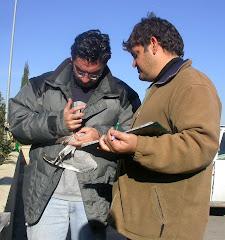 Óscar y Javier anillando una gaviota reidora en el vertedero de Pinto
