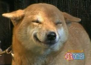 perrosonrie El perro que sonríe