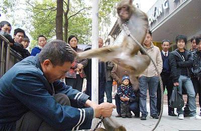 monos Monos karatekas atacan a su entrenador