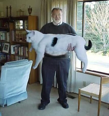 el gato mas grande del mundo Los 10 mejores montajes fotográficos