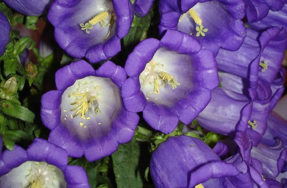 rosas no jardim de deus : rosas no jardim de deus:Flores no Jardim – Lee Albrecht: Home Page!!! Escola de Bordado!!! 1