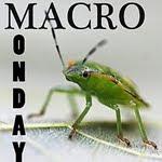 """""""Macro Monday"""""""