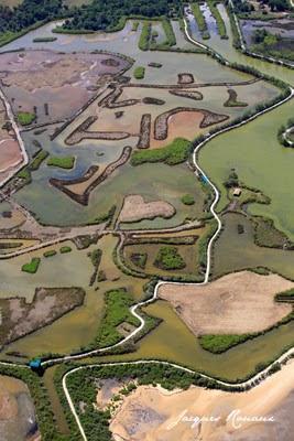 Photo aérienne du Parc Ornithologique du Teich à l'est du Bassin d'Arcachon
