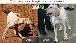 Antes  e depois de ser adotado !!!!