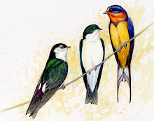 Three Swallows