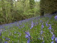 Kings Wood Cornwall