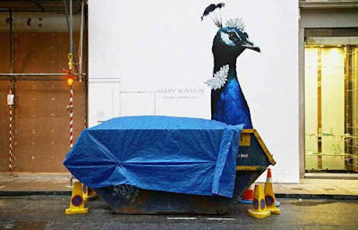 a rubbish peacock - coincidence picture