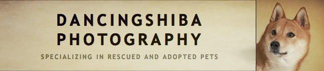 DancingShiba Photography