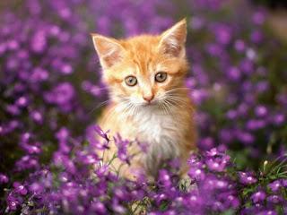I gatti sono proverbialmente attratti dal pericolo ma di solito, in virtù  delle loro sette vite, riescono a cavarsela. Questo però non ci solleva