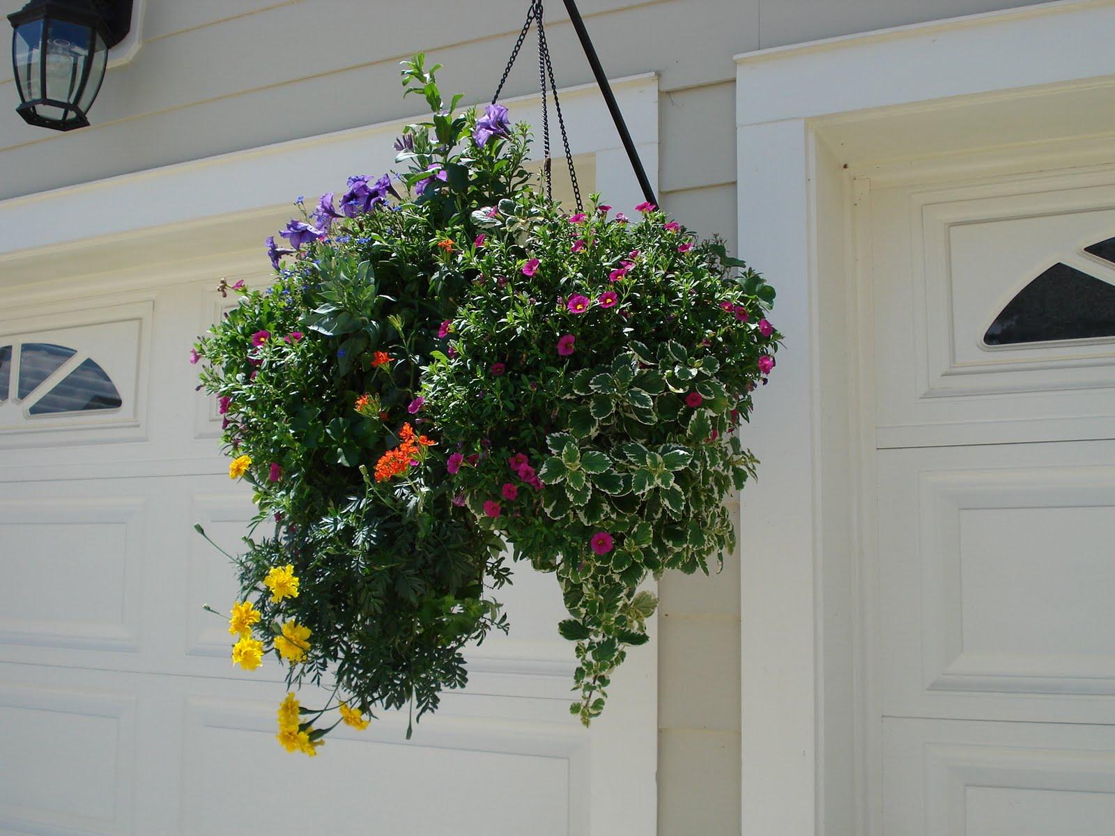 Цветы в подвесные фото и названия