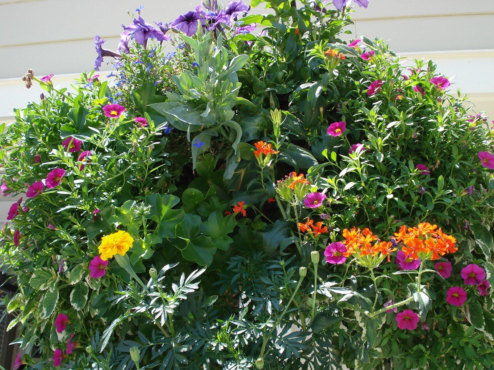Victorian Hanging Flower Baskets : Big bloomers flower farm victorian baskets