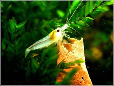 Ryby akwariowe - jfyu39