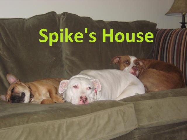 Spike's House