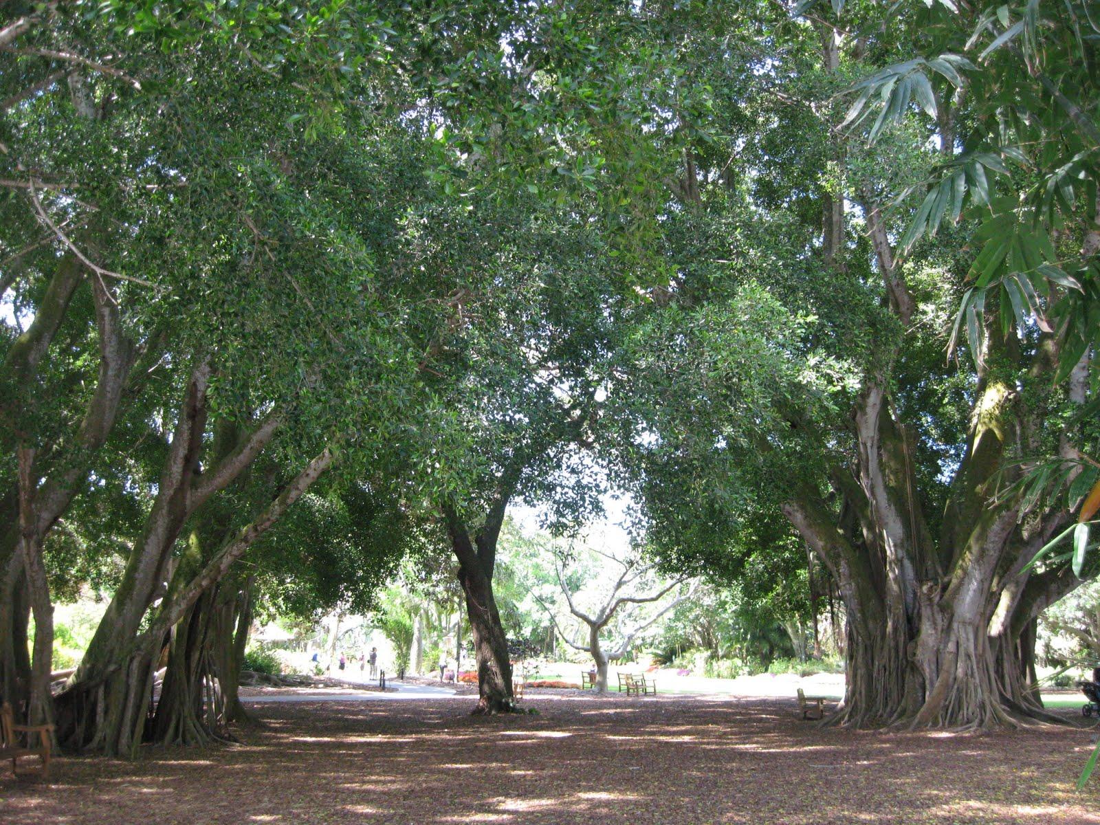 Lynn Sarda Selby Botanical Gardens Sarasota