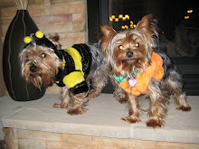 Zeus & Zoey getting all dressed up for Halloween