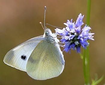 La oss håpe på masse sommerfugler i sommer