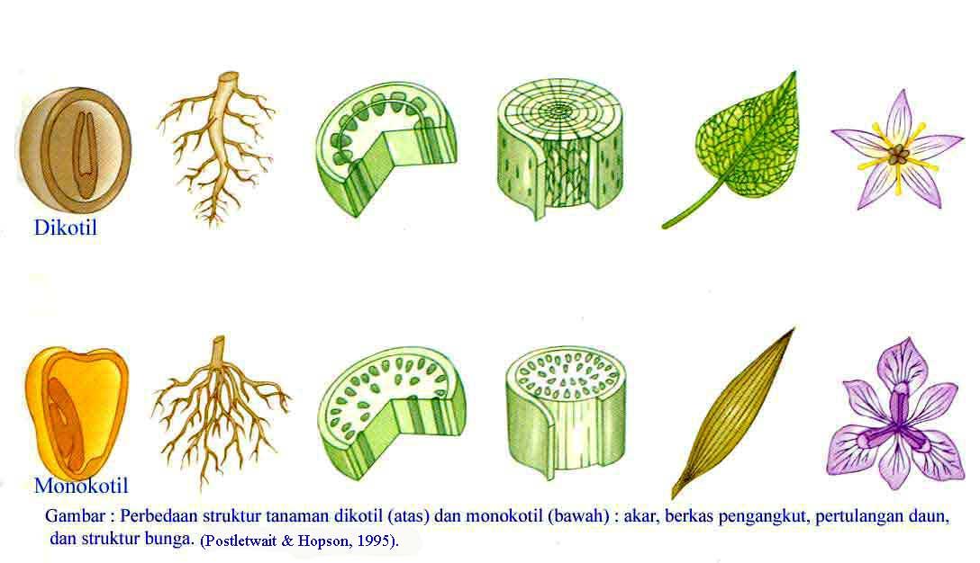 Gaubtasėkliai augalai