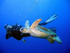 Sukella meren pinnan alle !