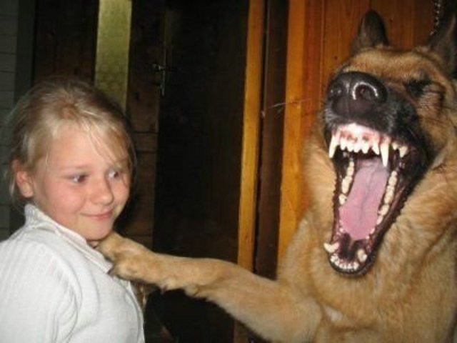 25 de novembro - Dia do cachorro comediante