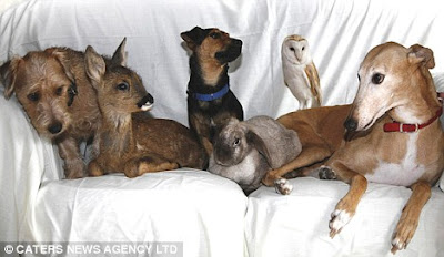 amazing animal news of jasmine the surrogate dog mother creates a buzz by exemplifying the perfect surrogate animal. Jasmine became the headline of animal news and dog news
