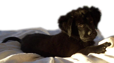 puppy personalty trait, personalty trait in puppies