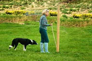 guillory  sheepdog trials