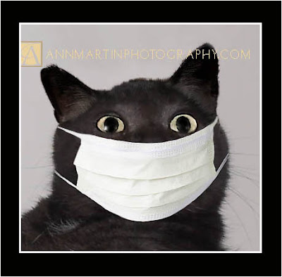 lol cats funny kitty cat pictures of swine flu cat with mask or kitty with doctor mask or kitty surgeon