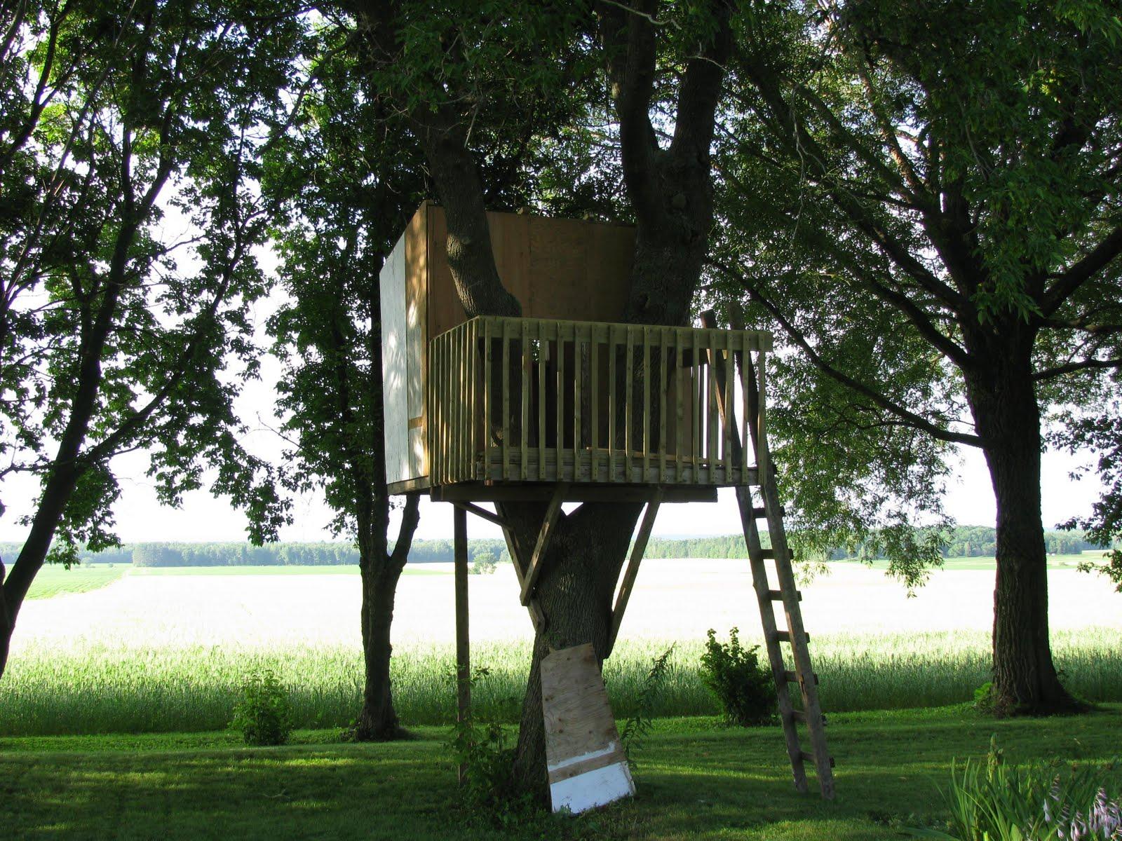 Faire sa cabane dans les arbres il suagit de horace burgess il a commenc construire sa cabane - Cabane dans les arbres pour enfants ...