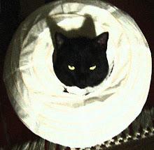 The Evil Cat