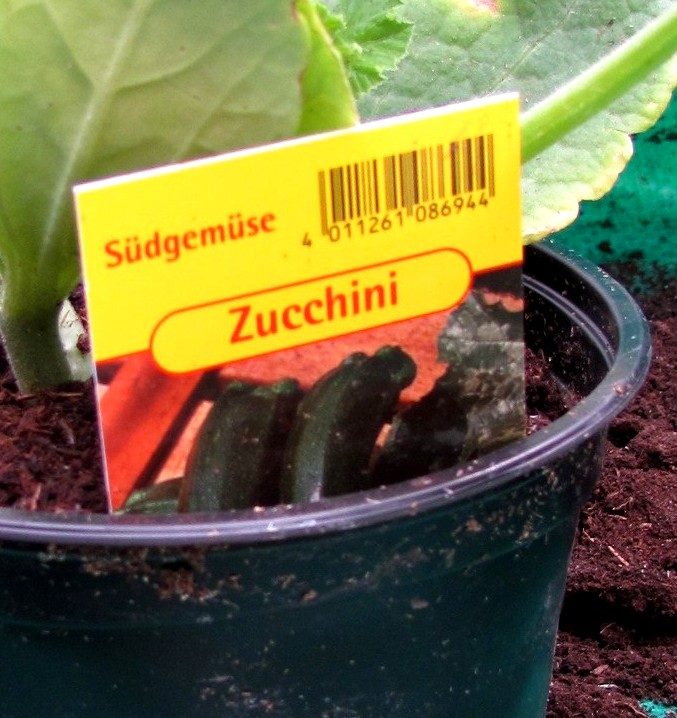 gartenarbeit ideen interna ber zucchini zuccini. Black Bedroom Furniture Sets. Home Design Ideas
