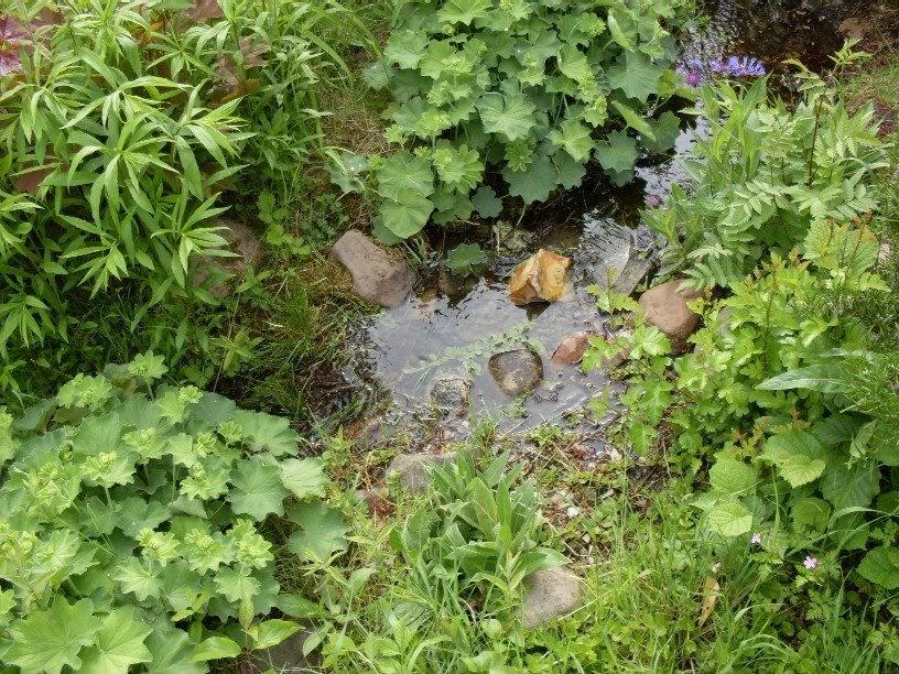 Garten anders einen bachlauf im garten mit teichfolie anlegen - Bachlauf im garten bilder ...