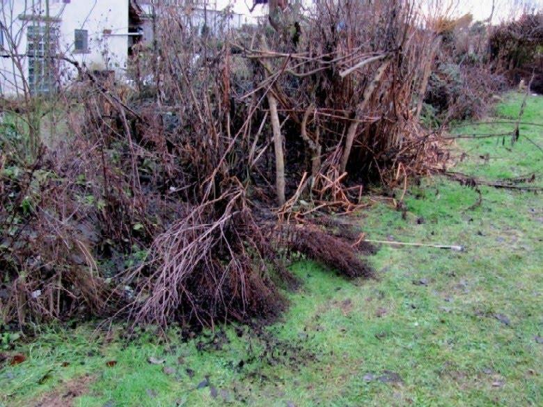 Garten anders gartenarbeit f r den januar for Gartenarbeit im januar