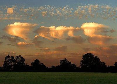 Jellyfish clouds