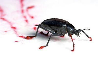 Meet artist Steven Kutcher the bugs painter