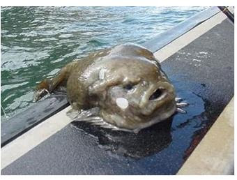 The Lump Fish