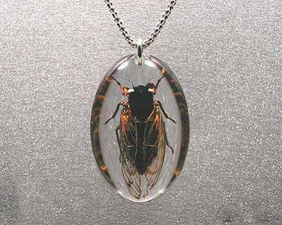 Beautiful Insects jewelry