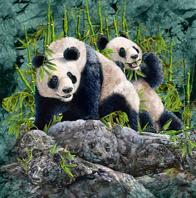 Hidden Pandas illusion picture