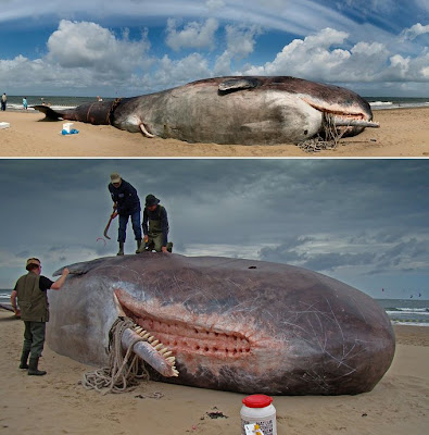 Sperm Whale, Scheveningen Beach, The Netherlands