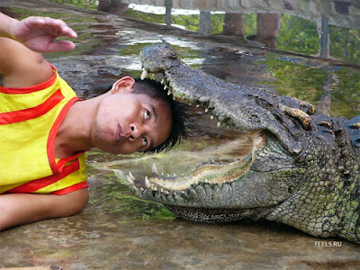 Crocodile stunts