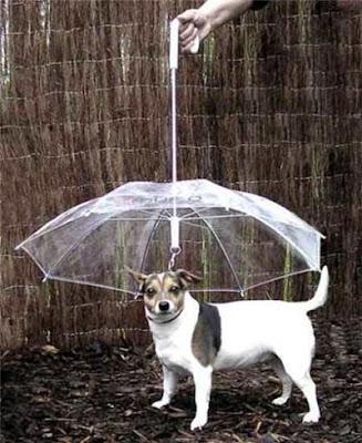 Зонт для собак