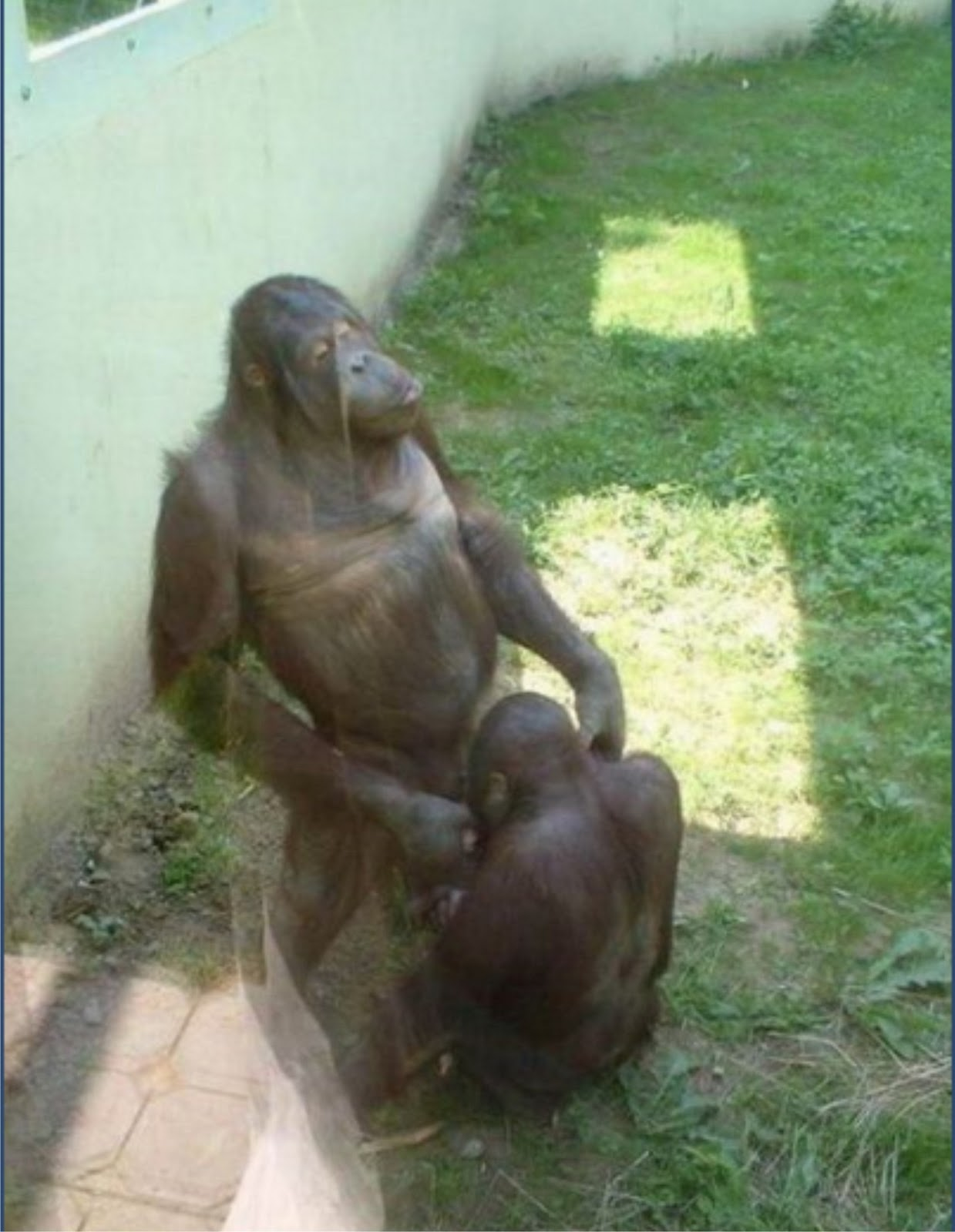 Chimpanzee monkey fuck girl sexy smut photo