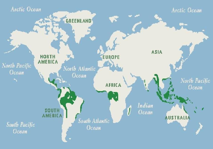 Kelip Kelipan Contest Hutan Hujan Tropika