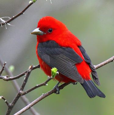 Gambar-gambar burung tercantik di dunia