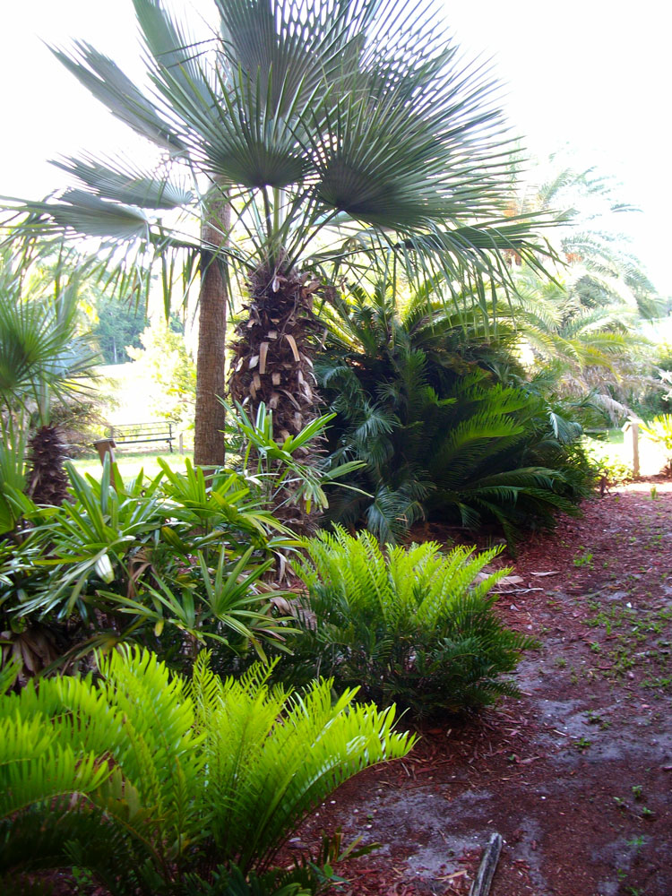 The Rainforest Garden: Palm and Cycad Arboretum in Jacksonville