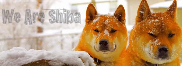 We are Shiba