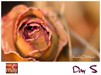 Una Rosa Secca