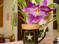 Army Orchid