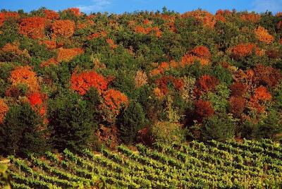 Les couleurs d'automne en photos Foret-automne